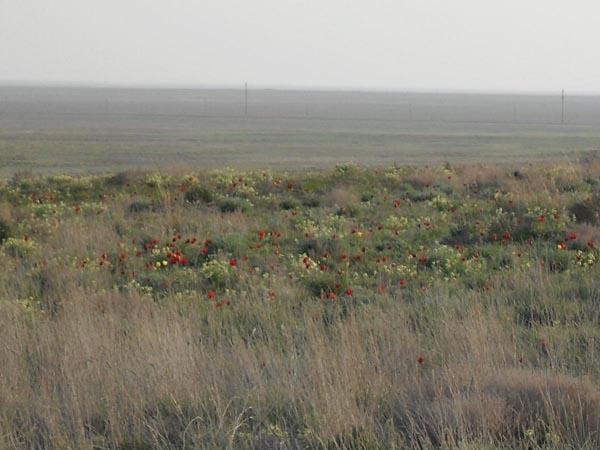 флора Богдинско-Баскунчакского заповедника